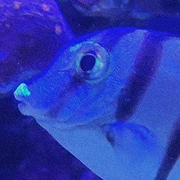 Ooze Fish