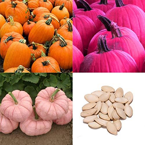 Soteer Garten- 20 Stück Zierkürbis Samen Bio Gemüsesamen Riesenkürbis Zierpflanzen Schnellwachsend für Garten, Zäune, Pergolen