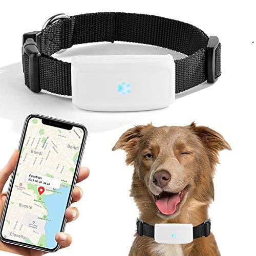 Localizador GPS para Perros y Gatos,Rastreador GPS Tiempo Real Localizador de Dispositivos Historial de Ruta Impermeable APP Gratuita