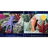 Zoom IMG-2 dominatori dei caraibi pack 4