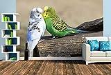 Premium Foto-Tapete Wellensittiche (versch. Größen) (Size L | 372 x 248 cm) Design-Tapete, Wand-Tapete, Wand-Dekoration, Photo-Tapete, Markenqualität von ERFURT
