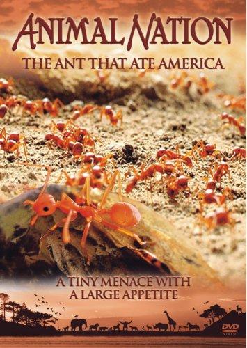 Animal Nation - The Ant That Ate America [Edizione: Regno Unito]