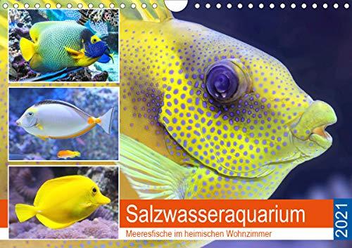 Salzwasseraquarium. Meeresfische im heimischen Wohnzimmer (Wandkalender 2021 DIN A4 quer)