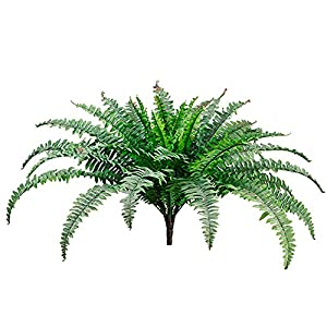 25″ Boston Fern Bush x49Green Frosted (Pack of 6 )