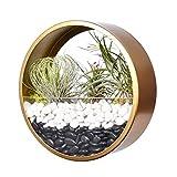 Maceta redonda para colgar en pared,moderna cesta de metal para plantas jarrón de flores para colgar plantas suculentas recipiente de cristal soporte independiente maceta para decoración hogar dorado