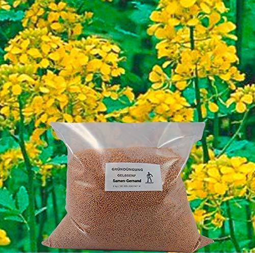 Gelbsenf Gründüngung Samen 5 kg Frische Saat