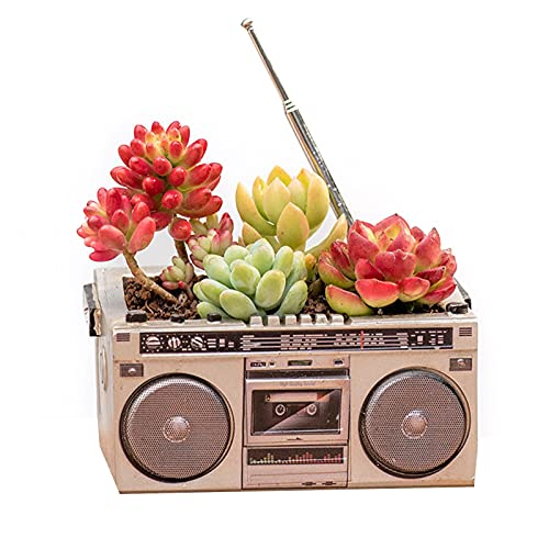 Marjory Flower Pots - Macetas de resina para plantas suculentas, contenedores y accesorios para el hogar, la oficina, el balcón o la decoración del balcón
