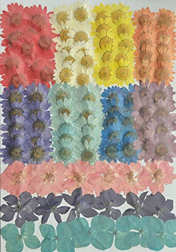 LoveDiyLife Red Flower colorful daisy and pink purple Larkspur and blue hydrangea Real Pressed Dried Flowers