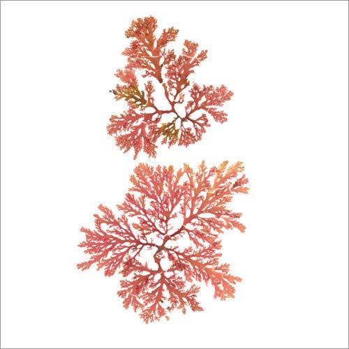 Posterlounge Leinwandbild 50 x 50 cm: Pazifische Meerespflanze I von Wild Apple Graphics - fertiges Wandbild, Bild auf Keilrahmen, Fertigbild auf echter Leinwand, Leinwanddruck