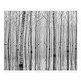 Bilderwelten Cortinas deslizables set - Birches In November - 5 Paneles japoneses, cortina...