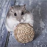 Hartschaumbild 70 x 70 cm: Hamster 1 von Heidi Bollich