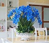 50 piezas/bolsa bonsái semillas de orquídea, hermosa phalaenopsis orquídea hogar jardín planta orquídea maceta calidad semillas de flores niños regalo 8