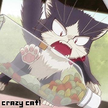 Crazy Cat!