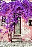 bloom green co. 100 pezzi colori sgargianti delle bouganville flower flower pot balcone giardino fiori nel bonsai fiorifera hardy ornamentale pianta: 10