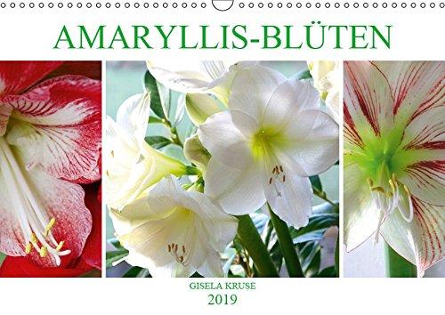Amaryllis-Blüten (Wandkalender 2019 DIN A3 quer): Majestätische Blumen mit beeindruckenden Staubgefäßen (Monatskalender, 14 Seiten ) (CALVENDO Natur)