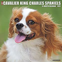 Just Cavalier King Charles Spaniels 2019 Calendar (英語) カレンダー[Willow Creek Press/Amazon]