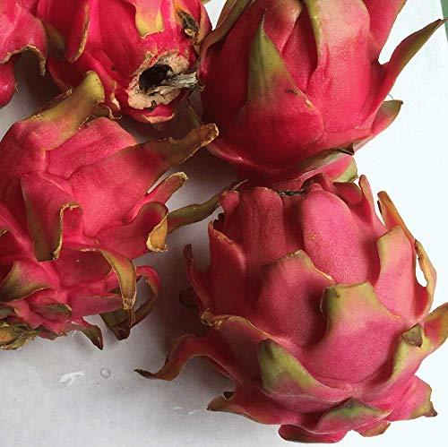 沖縄県産 訳あり ドラゴンフルーツ 赤 2kg 3〜8個入り 送料無料