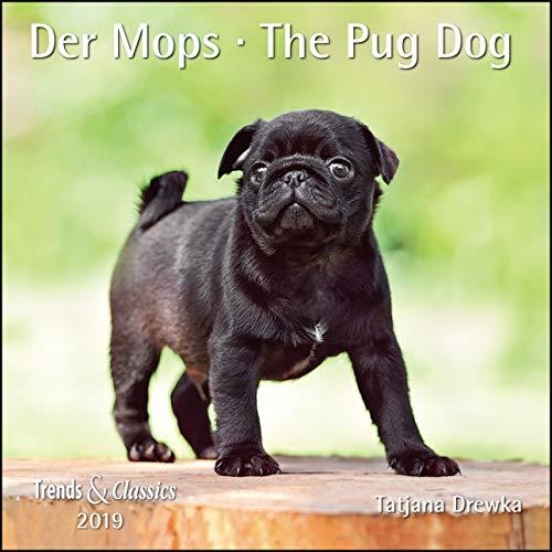 Preisvergleich Produktbild Der Mops The Pug Dog 2019 - Broschürenkalender - Wandkalender - mit herausnehmbarem Poster - Format 30 x 30 cm