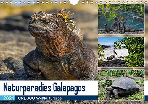 Naturparadies Galapagos - UNESCO Weltkulturerbe (Wandkalender 2021 DIN A4 quer)