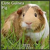 Cute Guinea Pig Calendar 2021: Official Guinea Pigs 2021 Wall Calendar, 12 Months