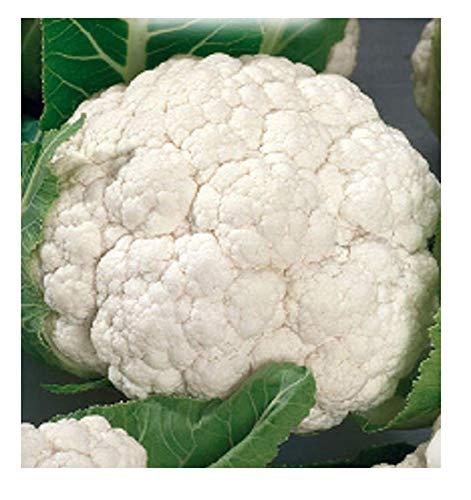 4400 c.ca sneeuwbal bloemkoolzaden - medium vroeg - brassica oleracea - in originele verpakking - gemaakt in italië - bloemkool - cf005