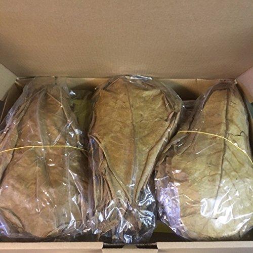 Seemandelboomblaadjes met steel 20-25 cm (=250 gram >100 stuks) Catappa Leaves topkwaliteit - bliksverzending