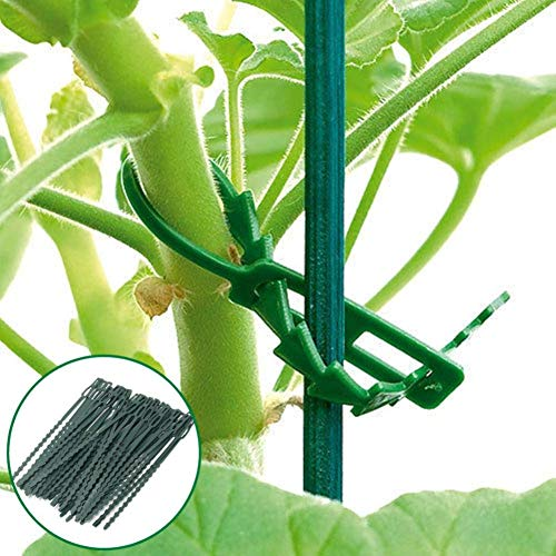 Quanjucheer 30 pcs 17 cm Plastique d'escalade support pour plantes Attaches de câble Green