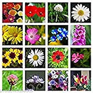 10g Pure Meadow Wild Flower Butterfly & BEE Mix 16,000 Seeds Poppy Cornflower Oxeye Daisy