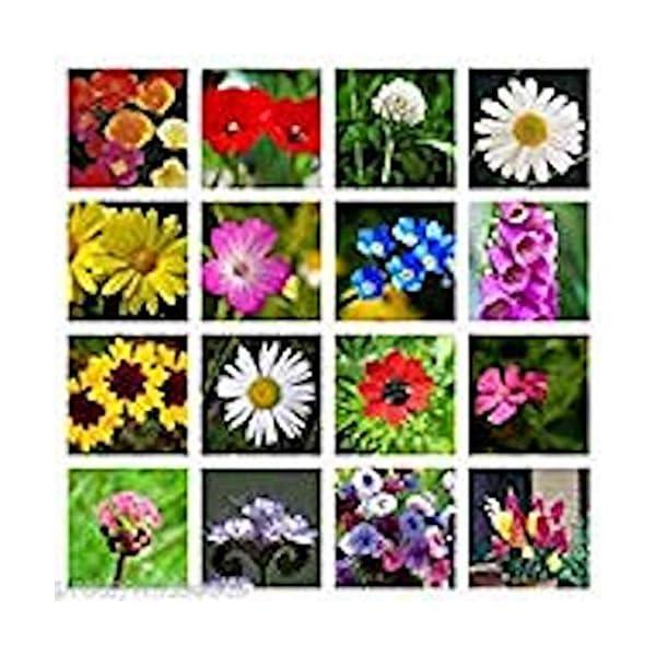10g Pure Meadow Wild Flower Butterfly & BEE Mix 16,000 Seeds Poppy Cornflower Oxeye Daisy