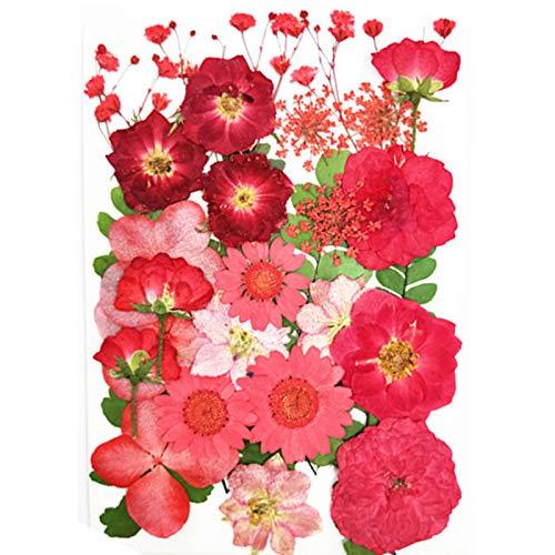 JONJUMP Flores Prensadas Pequeñas Flores Secas Scrapbooking Seco DIY Conservado Flor Decoración Hogar Bloemen Flores Secas