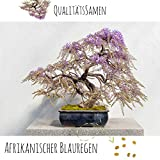Exotische Bonsai Samen mit hoher Keimrate - Pflanzen Samen Set für deinen eigenen Bonsai Baum (1x...