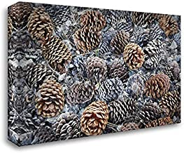 CA, Fallen Jeffrey Pine Cones in Sierra Nevada 40x28 Gallery Wrapped Stretched Canvas Art by Flaherty, Dennis
