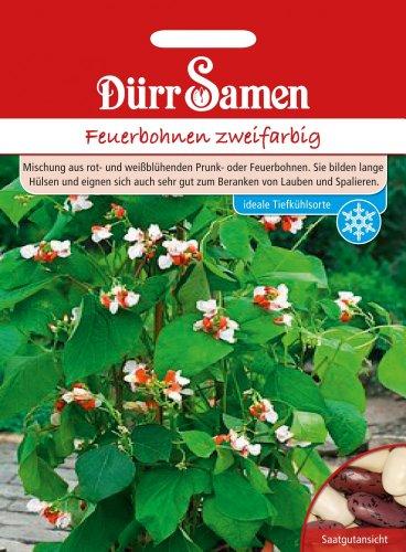 Dürr-Samen Feuerbohnen zweifarbig