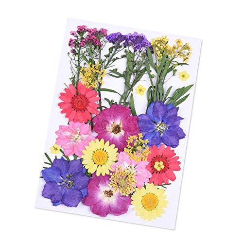 Classicoco Geperste bloemen gedroogd DIY kunsthandwerk scrapbooking decoratie multifunctioneel