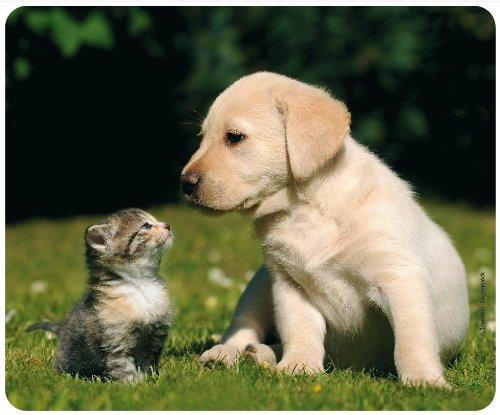 """Alfombrilla de ratón con diseño de """"Best Friends - Gato y perro"""" (motivo 108) de animales: alfombrilla de ratón de calidad de caucho especial extremadamente resistente con parte inferior adhesiva para un agarre óptimo."""