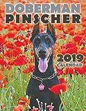 Doberman Pinscher 2019 Calendar