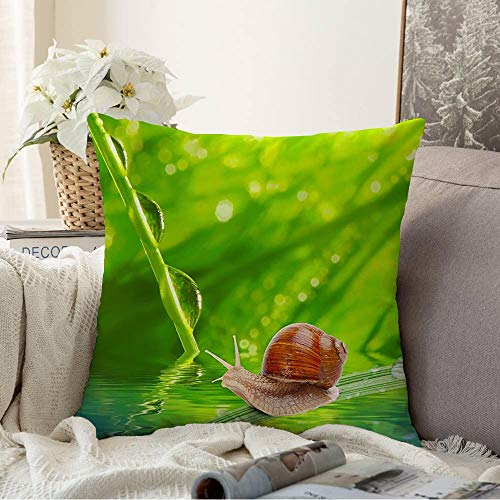 Decorative Square Throw Pillow Cover Morning Ecology Leaf Dew On Spring Grass Animals Wildlife Shallow Textures Springtime Animal Makro Cushion Pillowcase Decorations for Car Bed 16x16 Inch