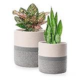 FairyLavie Paquete de 2 cestas de Cuerda de algodón para decoración...
