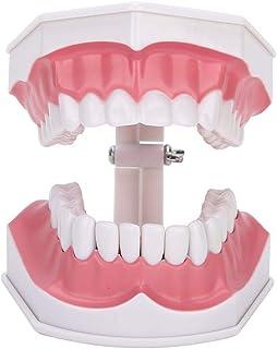 Tandheelkundige tanden model, tandenpoetsen flossen praktijk, tandheelkundige tanden zorg model met tandenborstel, studere...