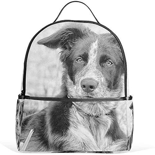Herren Rucksack,Border Collie Cool Dog Rucksack Casual Daypack School College Reisetasche Für Jugendliche Jungen Mädchen