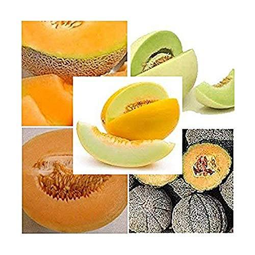 5 Arten - Melonen Mischung - Melone - 30 Samen