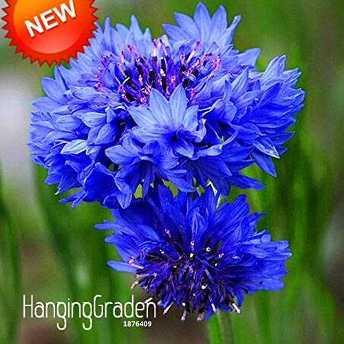 New Seeds 2017!Blue Cornflower Centaurea Cyanus Seeds Balcony Patio Garden Flowers Potted Bonsai Plant Seed 100 Seed/Lot,#Vzi7Zf