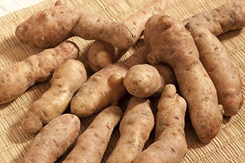 Bamberger Hörnchen Kartoffeln im 3 kg Beutel