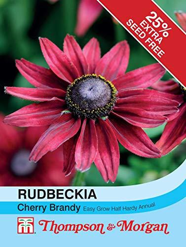Thompson & Morgan - Flowers - Rudbeckia Cherry Brandy - 50 Seed
