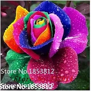 Best black dragon rose bush for sale Reviews