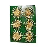 riffelmacher & weinberger christbaumschmuck-fabrik gmbh&co.kg 75852 - Juego de Estrellas de Paja (5 cm, 6 Tarjetas), Color Natural