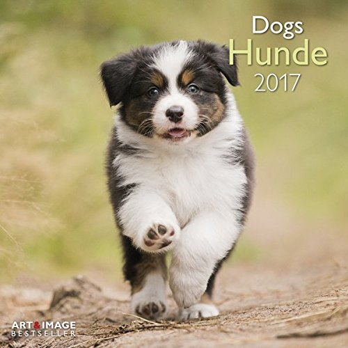 Hunde 2017 Broschürenkalender A&I: Zwölf niedliche Hundefotografien