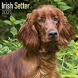 Irish Setter 2021 Wall Calendar