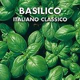 basilico italiano classico - semi
