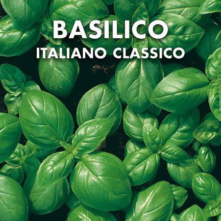 Semillas de albahaca italiana clásica